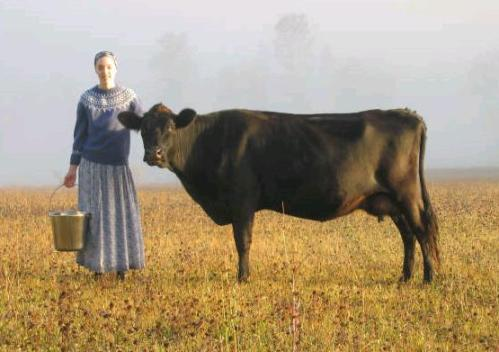"Naomi Fournier of Birdsong cowshare in Enderby BC with ""Blossom""."